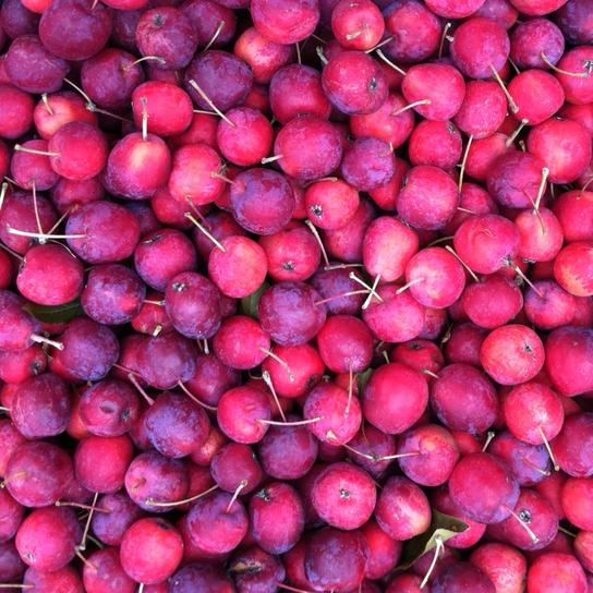 Crabapple & Rose Wine Jam